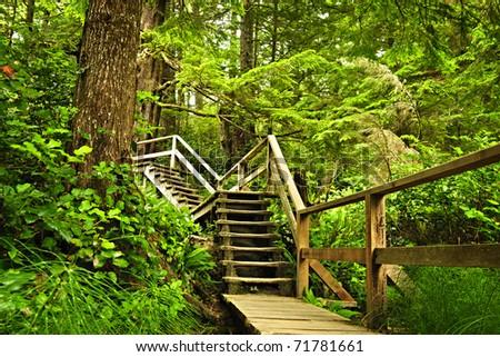 Path through temperate rain forest. Pacific Rim National Park, British Columbia Canada - stock photo