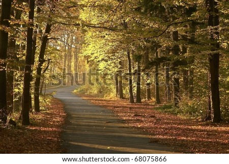 Path through the autumnal forest backlit by the morning sun. - stock photo