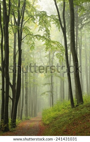 Path through the autumnal forest in the fog. - stock photo
