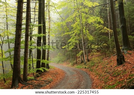 Path through the autumnal forest on a foggy morning. - stock photo