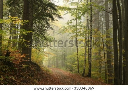 Path through the enchanted autumn forest. - stock photo