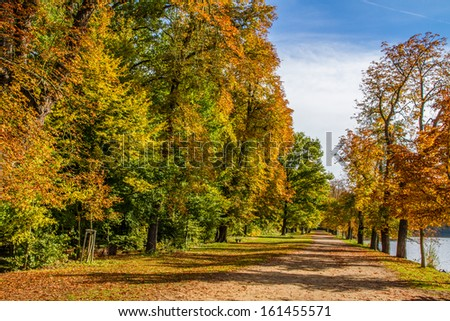 Path through the park in Autumn with Colored Trees