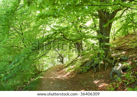 Path through the sunny green beech forest - stock photo