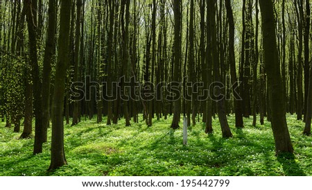 Path through the sunny spring forest  - stock photo