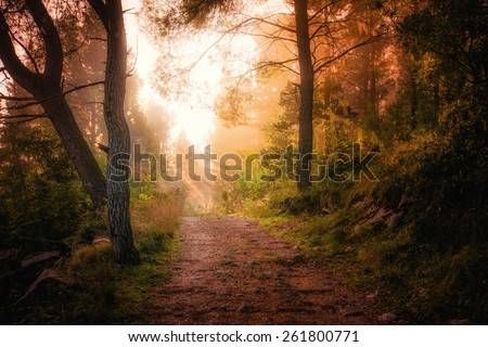 Path through the woods and light rays as they break through morning mist - stock photo