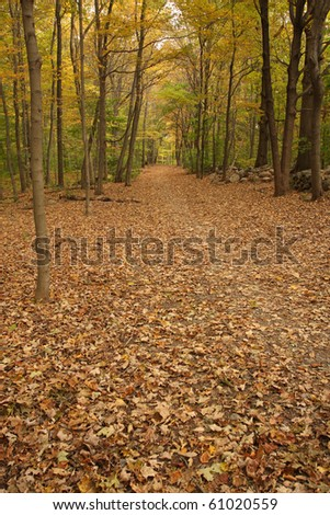 Path through the woods in Fall - stock photo