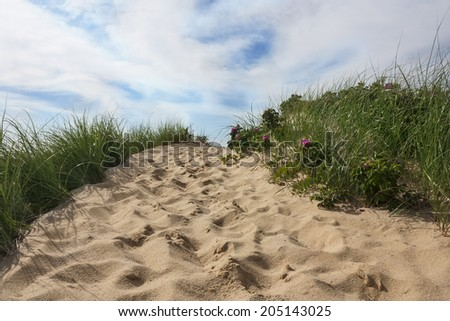 Path to beach in Wellfleet, Massachusetts on Cape Cod with blue sky and beach grass - stock photo