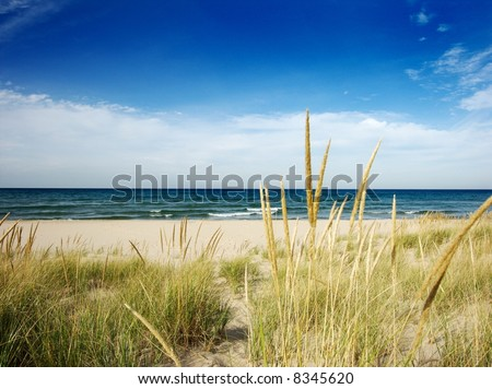 path to beach with dune grass - stock photo