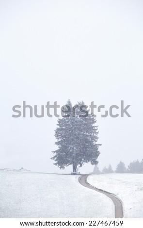 path to tree and snowfall in Bavarian Alps, Germany - stock photo