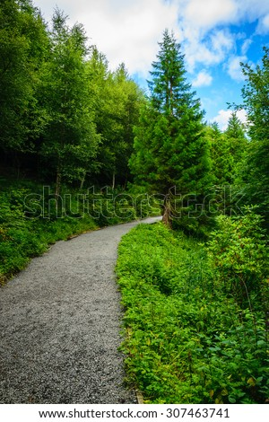 Path tree in the forest on the border between coniferous and dec - stock photo