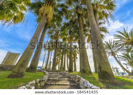 Path under the Palms in Cannes, France