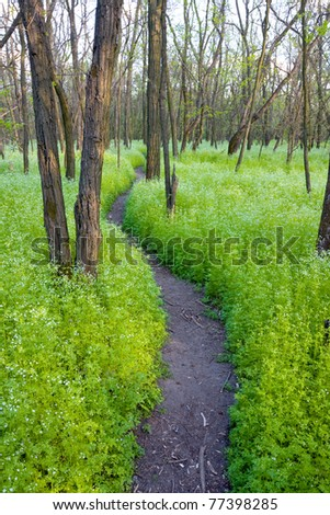 path way in spring forest - stock photo