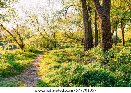 Path Way Through Park Summer Woods Near River Or Lake At Spring Sunset Or Sunrise. Summer Landscape In Sunny Day. Nobody. Deciduous Forest Nature. Greenery, Green Color - Trend 2017