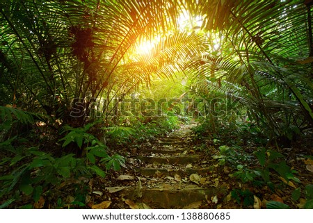 Path with stairs in a tropical forest - stock photo