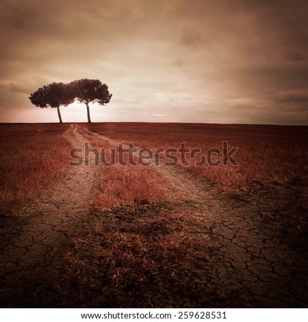 Path with trees  - stock photo
