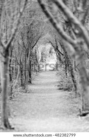 path with trees like a tunnel