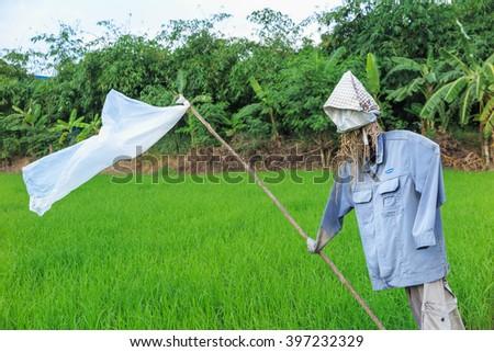 PATHUM THANI, THAILAND - NOV 14 : Scarecrow in rice field in Pathum Thani, Thailand on November 14, 2015. - stock photo