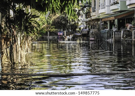 PATHUMTHANI, THAILAND - NOVEMBER 27: Heavy flooding from monsoon rain in north Thailand arriving in Bangkok suburbs on November 27, 2011 in Pathumthani, Thailand. Faces its worst flooding in 50 years. - stock photo