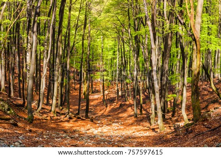 Pathway between Beech trees forest in summer sunny day. Little Carpathians mountains near Bratislava, Slovakia.