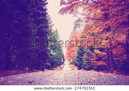 pathway in autumn forest with fallen leafs with instagram effect retro vintage filter - stock photo