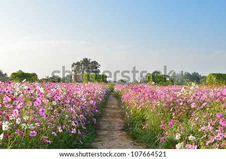 Pathway in beautiful spring flowers - stock photo