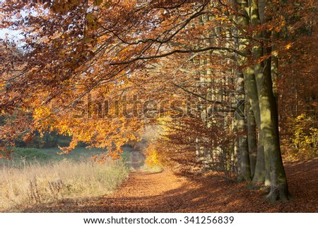 Pathway in colorful, sunny, autumn beech forest - stock photo