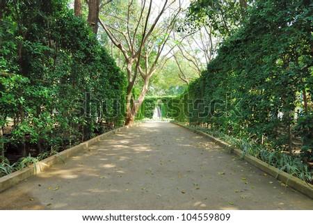 pathway in garden - stock photo