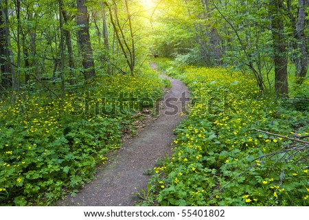 pathway in green forest - stock photo