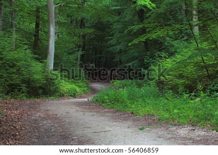 pathway in green forest, nature scenic - stock photo