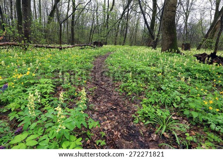 Pathway in spring forest among flowers meadow - stock photo