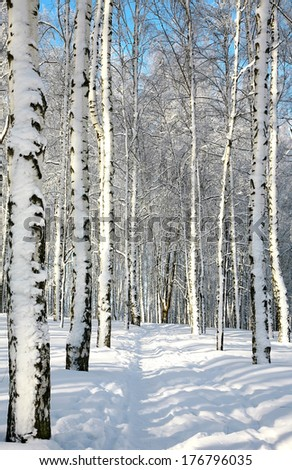 Pathway in sunny winter forest - stock photo