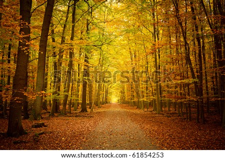 Pathway in the autumn forest - stock photo
