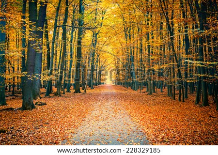 Pathway in the bright autumn park - stock photo