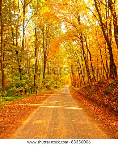 Pathway in the forest at autumn - stock photo