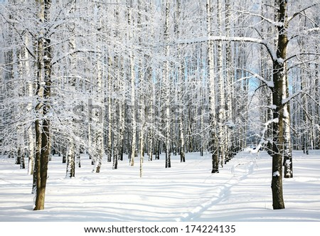Pathway in winter forest - stock photo