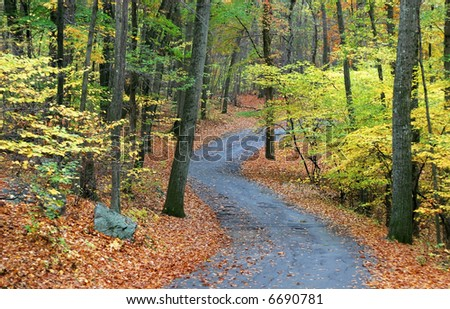 pathway in wooded area in Autumn
