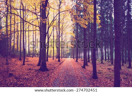 Pathway inautumn forest with fallen leafs with instagram effect retro vintage filter - stock photo