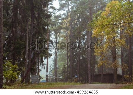 Pathway or Footpath through misty forest. Foggy weather. Road in the wood covered by fog. Fog over autumn forest. Beautiful mystical foggy landscape with yellow / green leaves and way. Silence, quiet - stock photo