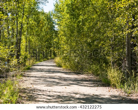 Pathway Through Green Forests
