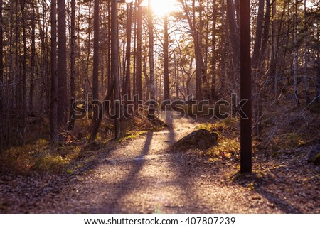 Pathway through pine forest. Path leading among the trees on sunny day. Beautiful landscape with path, pines, moss and stones. Sun shining in front, forming shadows. Forest way with lamppost at sides - stock photo