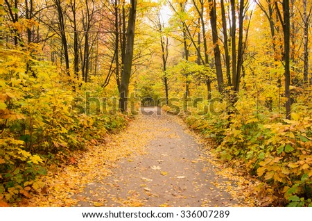 Pathway through the autumn forest