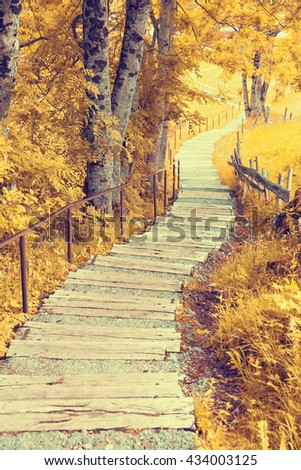 Pathway through the autumn forest - stock photo