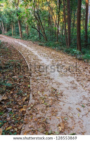Pathway through the autumn of tropical forest in Thailand