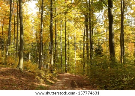 Pathway through the autumnal forest in the sunshine. - stock photo