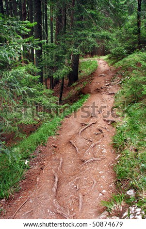 Pathway through the forest in spring - stock photo