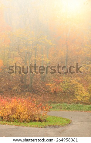 Pathway through the misty autumn park on foggy day. Autumnal scenery, beauty landscape. Fall trees and leaves.