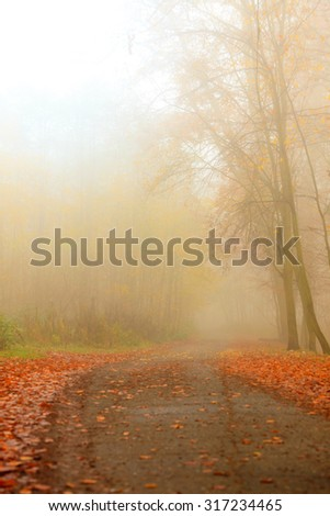 Pathway through the misty autumn park on foggy day. Autumnal scenery, beauty landscape. Fall trees and leaves. - stock photo