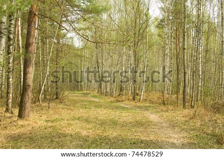 Pathway  through wood. Early spring.  Russia. Moscow area - stock photo