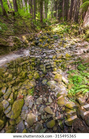 pathway to Sol duc falls in olympic national park,Wa,Usa  - stock photo