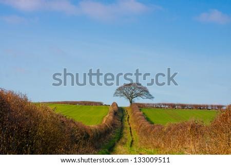 Pathway to success - stock photo